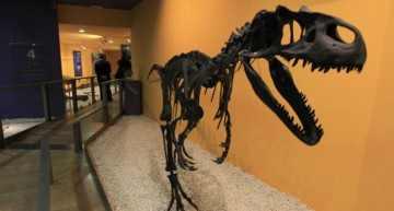 Visita a los dinosaurios en el Museo de Ciencias Naturales