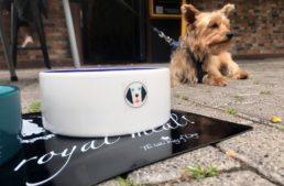 Restaurantes y terrazas de la Comunitat Valenciana comienzan a incorporar un menú para perros en su carta